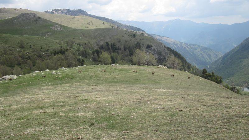 Mai 2010 Mesches 040a