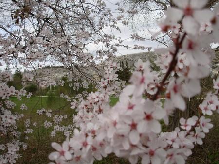 printemps_cavaillon_010