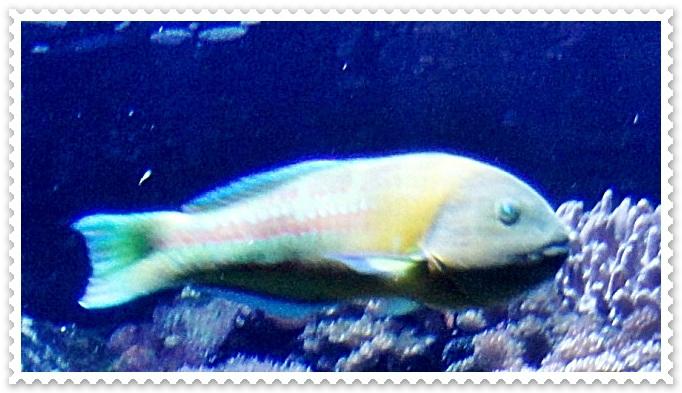 aquarium poisson rouge gamm vert aquarium de st gilles les bains 7 11 gratin de
