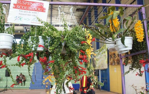 STAND SUPERBES ORCHIDEES
