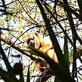 10-Pantanal