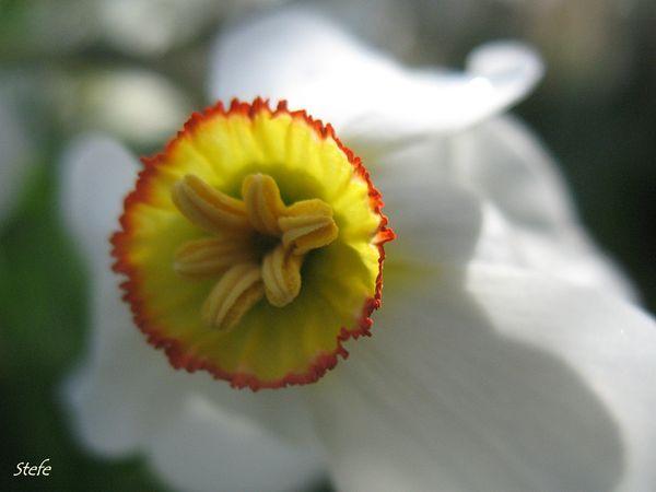 fleurs loigné (21)