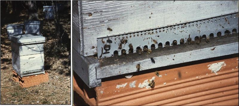 ruches du domaine de la Roussie