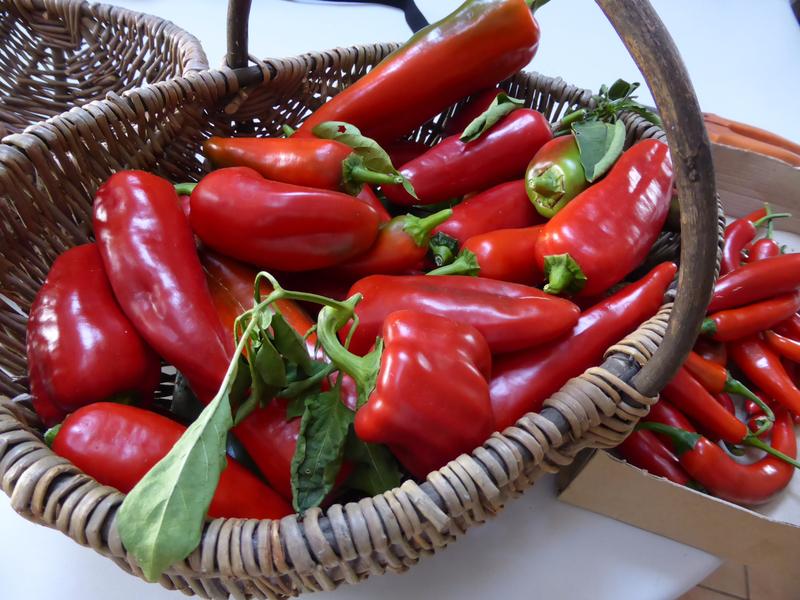 30-poivrons, piments (2)