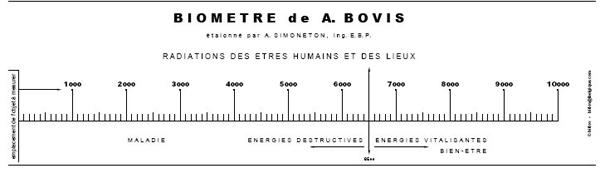 bovis-1