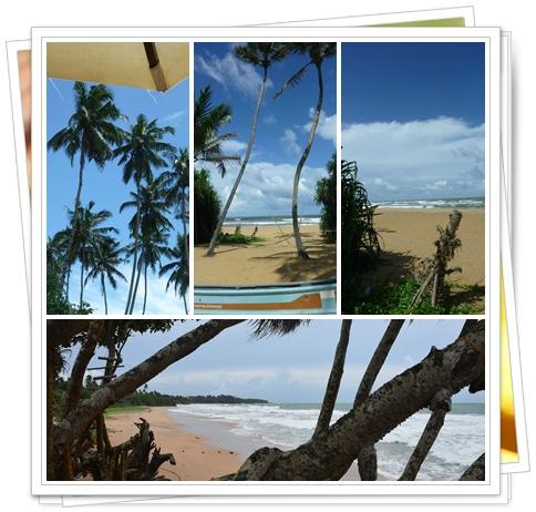 srilanka 35