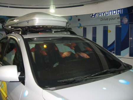 Busan_Aquarium_fish_in_a_car