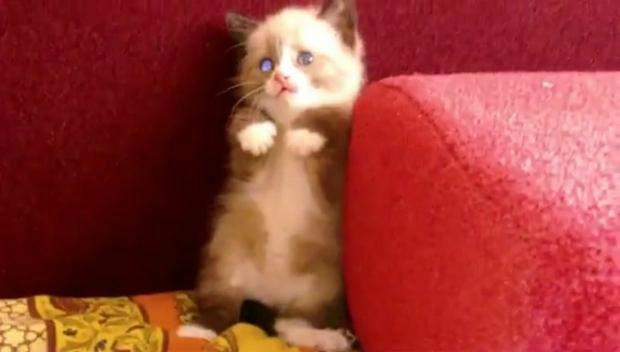 chat-peur-laspirateur-L-rtqe2N