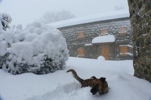 2008 12 15 La maison de Mr et Mme Piégay avec Kapy dans le neige