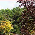 Feuillages automne 0810159