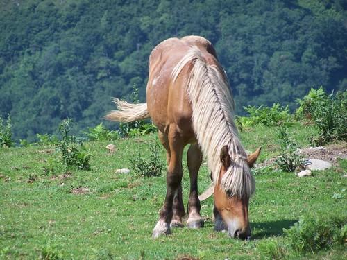 Clin d'oeil-cheval sauvage