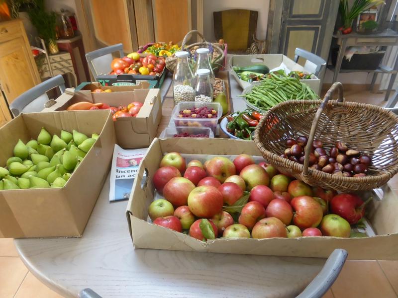 10-récolte du jour (5)