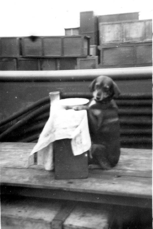 Flossie, la chienne du 9073. LCU...............