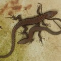 3 lzards entremls (photo prise par mathilde, 12 ans) t 2006
