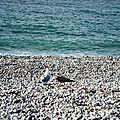 Deux mouettes sur plage de galets