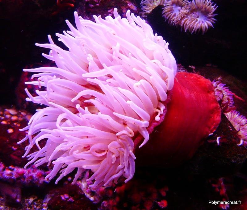 sea-anemone-4907_1280.jpg