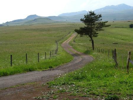 Prairie Auvergne