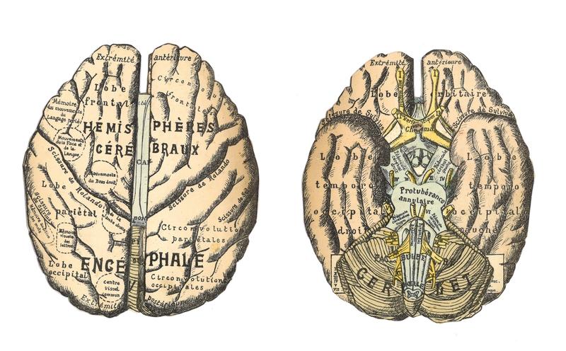 Cerveaux 1 et 2