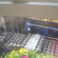 Récupération des fûts vides, le matin, vue de notre chambre