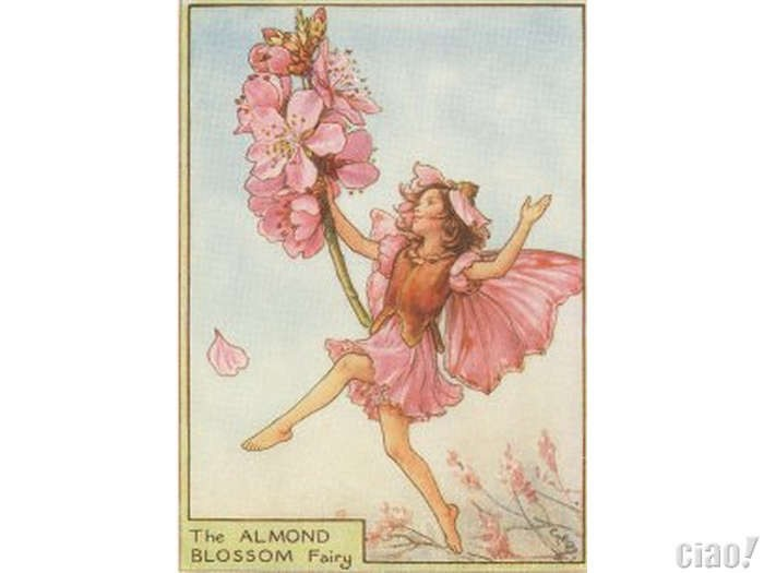 The Almond Blossom Fairy
