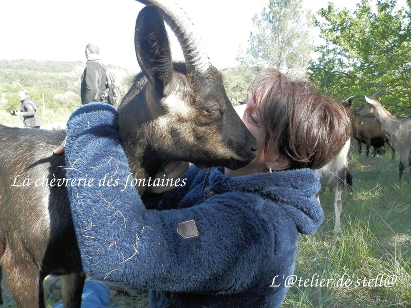 La chèvrerie des fontaines Mireille 3
