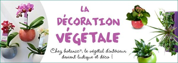 778x278_decoration_vegetale (1)