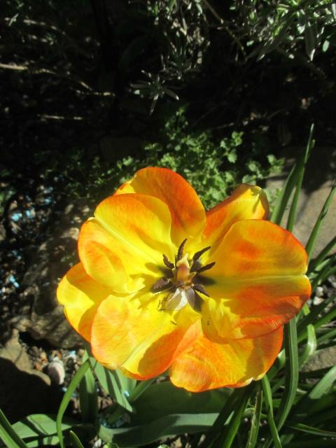jardin 6 mai2016 024