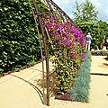 jardin des bougainvilliers 2