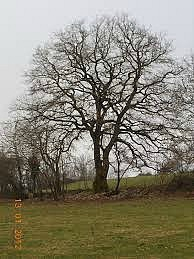 12 arbre