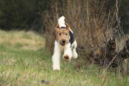 Comment faire pour que son chien ne fugue pas