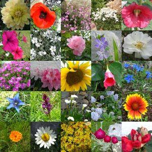collage_fleurs