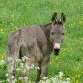 2008 06 02 Un âne