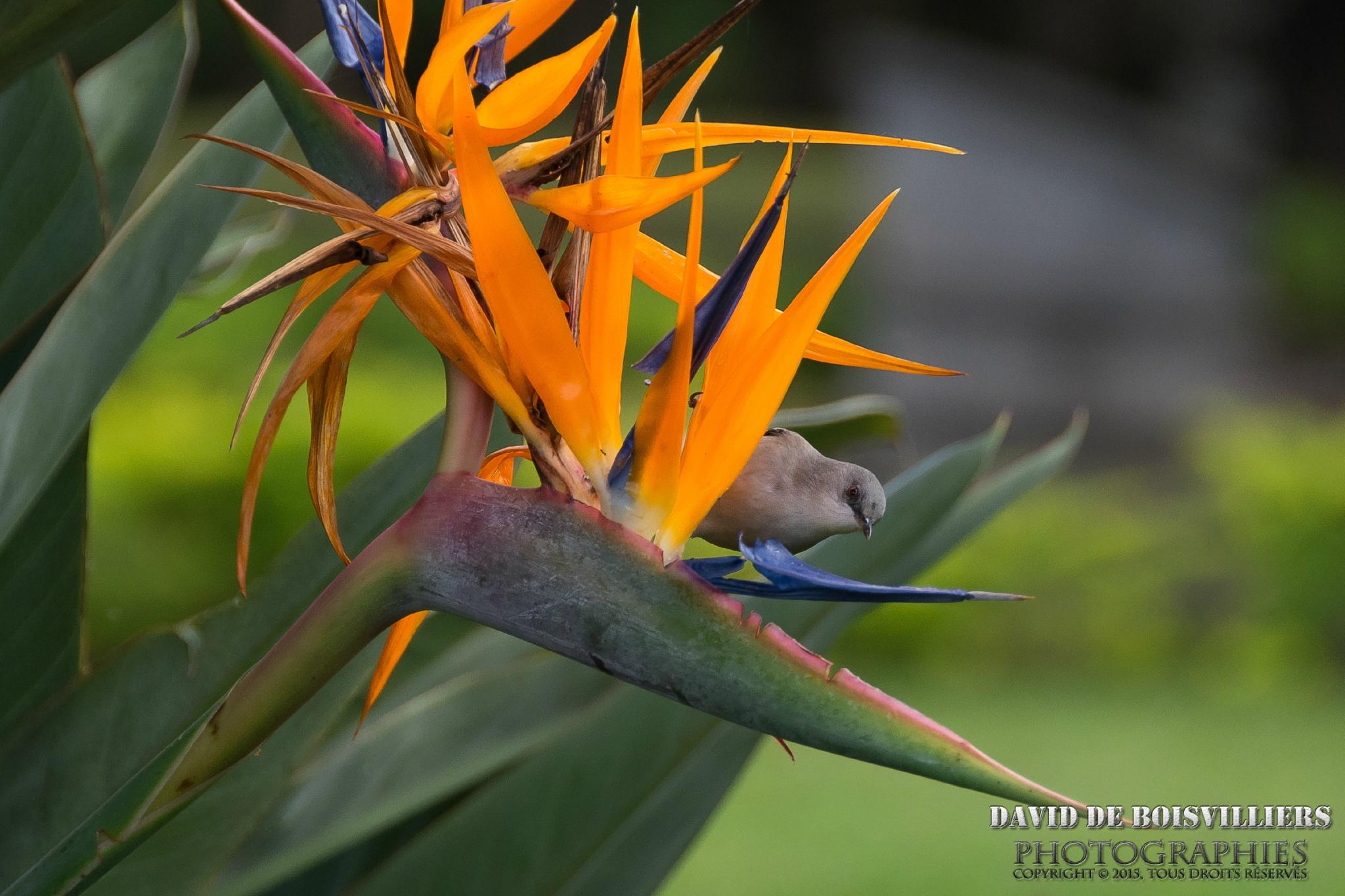 L'Île Maurice - La faune et la Flore