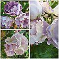 Ciel 10 06 & fleurs (18)