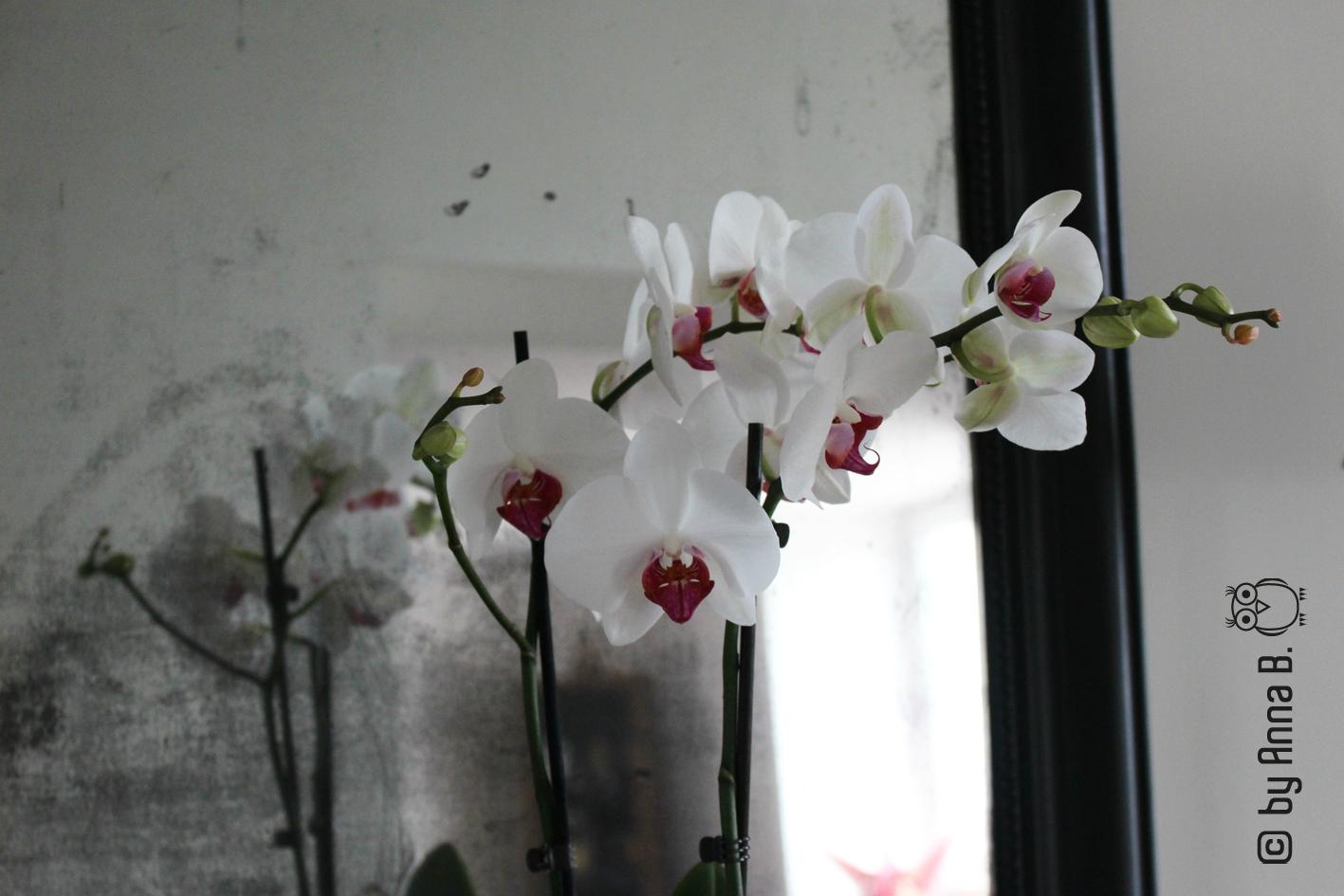 Des Fleurs dans ma Déco....
