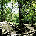 Arbre - Palenque