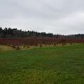 Bellevue & mercer slough nature park