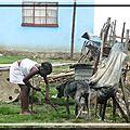 afrique-du-sud_uqweqwe_village-zoulou-101