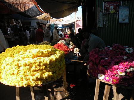 Mysore___Calicut___arriv_e_Cochin_291
