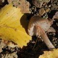 Feuilles mortes et champignons