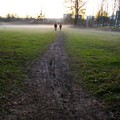 Promenade dans le brouillard