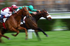 course_chevaux