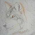 Un loup en hiver...