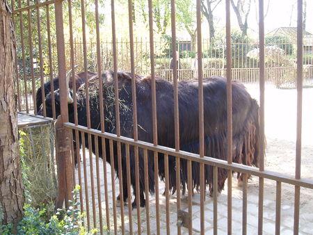 zoo rencontre