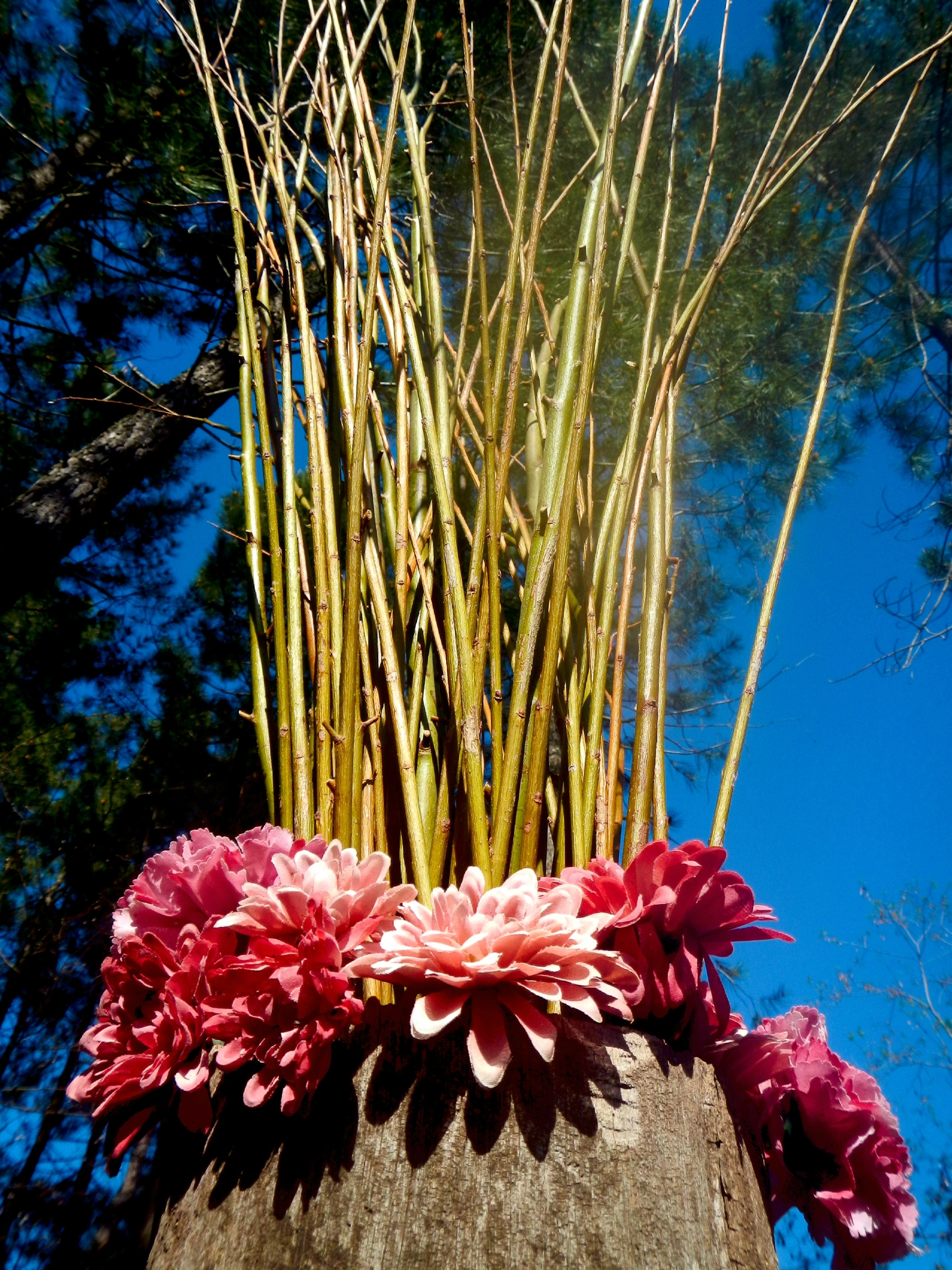 bouquet de branches d'osier yurtao