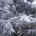 La neige ...