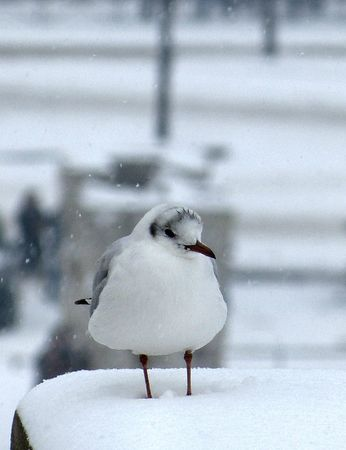 20janvmouette