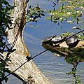 Lac d'Agès 29041639
