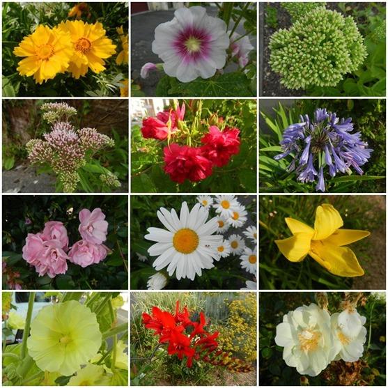 jolies fleurs
