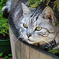 Mon copain Tigri